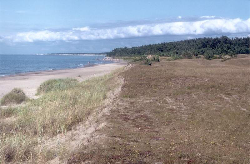 Fixed coastal dunes with herbaceous vegetation (grey dunes)